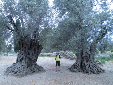 Massive 1,000 year old Olive Trees and me in the middle