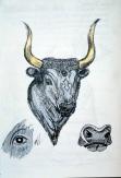 Bull Rhyton, Heraklion Museum, Crete, Greece